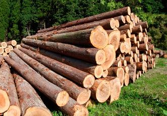 Обработка деревянных срубов и других бревенчатых строений, пораженных стволовыми вредителями