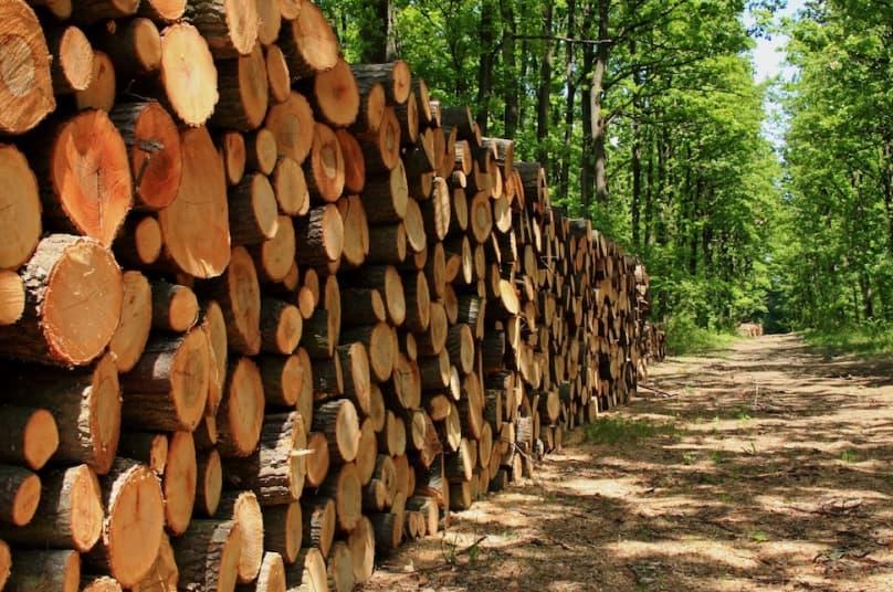 Фумигация  от вредителей для древесины